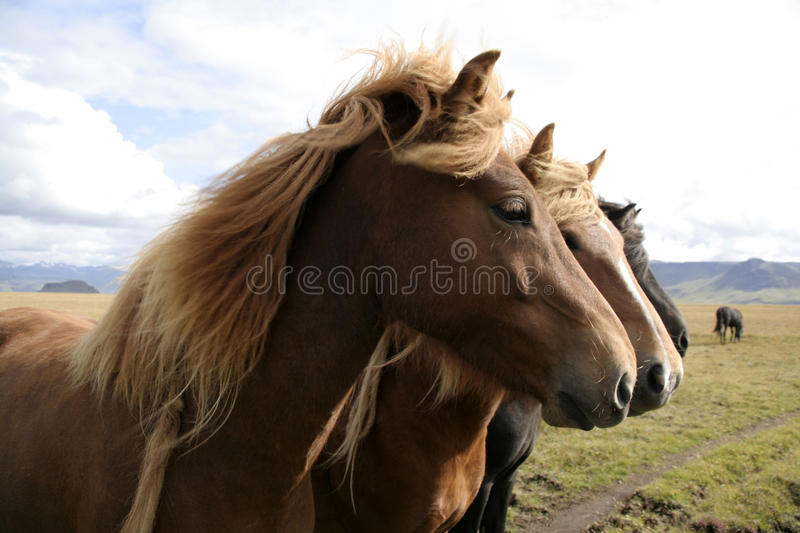 Tree horses royalty free stock images