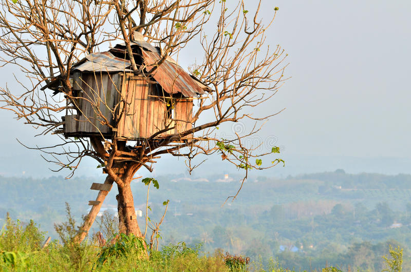 Tree house. Old house built on a tree