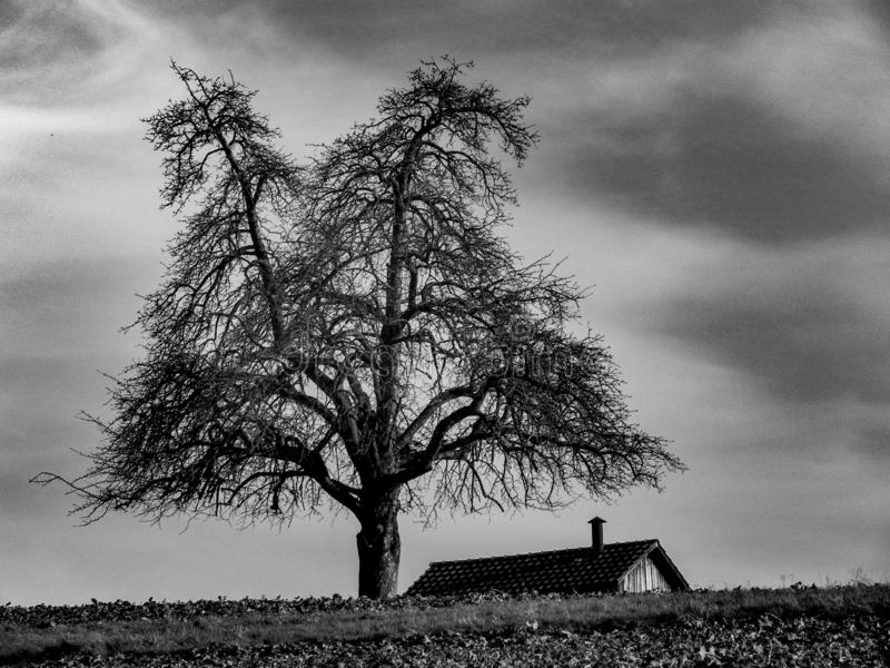 Tree and house on field at black and white. Three and house on field in black and white, horror, , silhouette, trees, plant, nature, naturelove, treelove royalty free stock photography