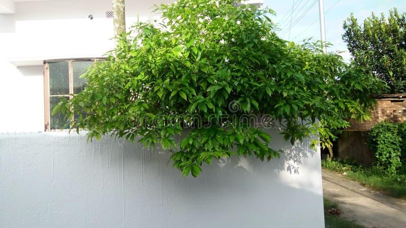 Tree house green daytime stock photo