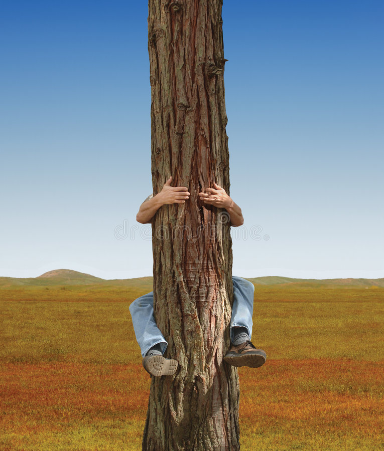 Tree Hugger. Man hugging a lone tree in a field royalty free stock photography