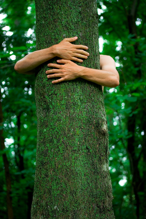 Tree hugger environmentalist. Arms of an environmental activist hugging a tall tree with spring green background stock photo