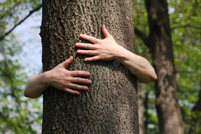 Tree hugger. Hugging a tree and loving nature dearly stock photo