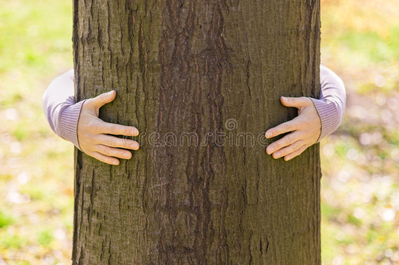 Tree hugging. Close-up of hands hugging tree royalty free stock photos