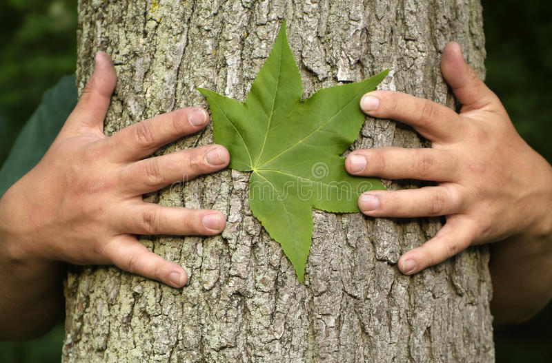 Tree hugging environmentalist. Earth Day Concept: Eco minded person hugging a tree with a green leaf between their hands royalty free stock images