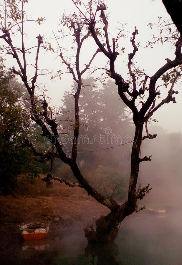 Tree i dimma royaltyfri foto
