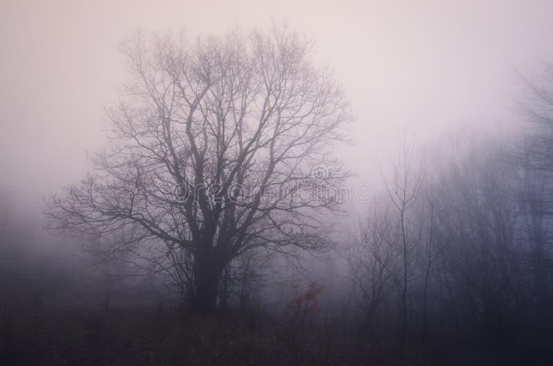 Tree i dimman royaltyfria bilder