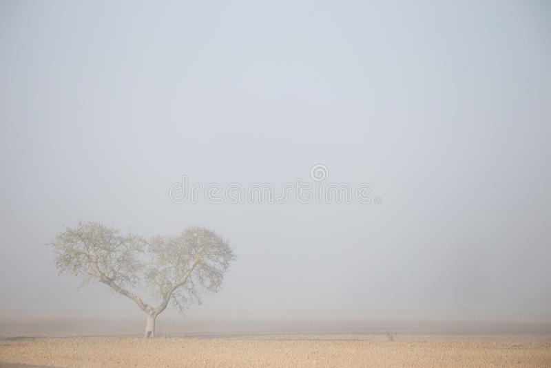 Tree i dimman royaltyfri foto