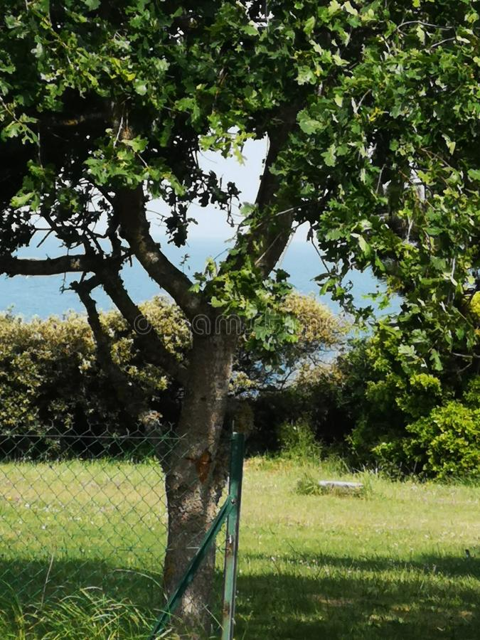 Calm tree royalty free stock photo