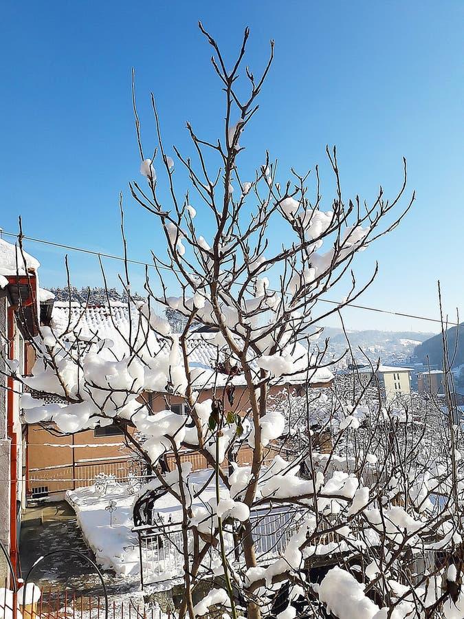 Tree i snow arkivfoto