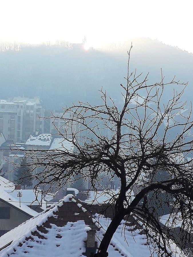 Tree i snow arkivbilder