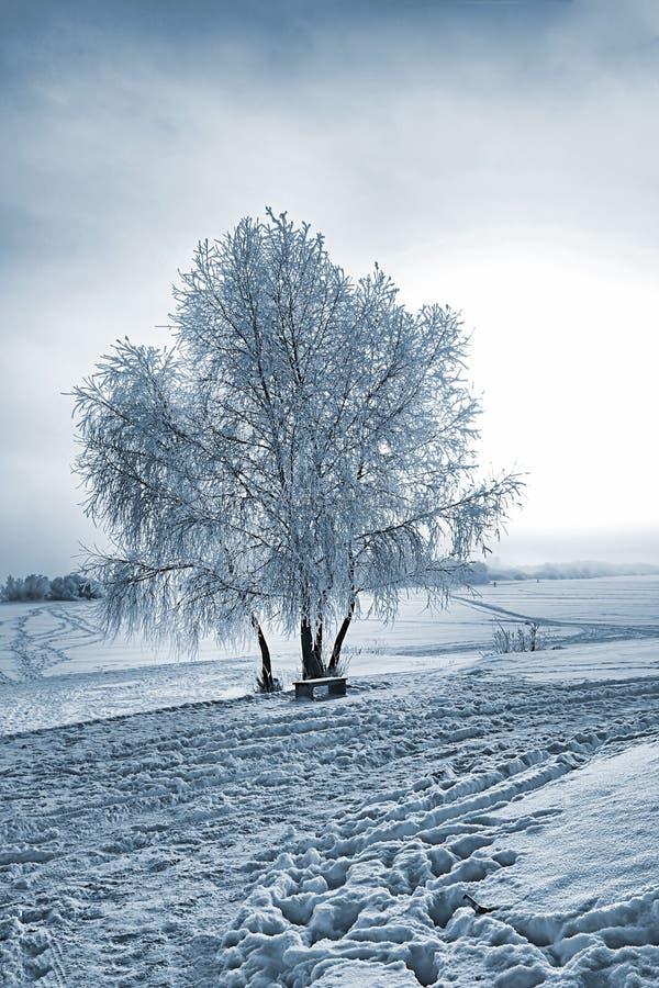 Tree i snow arkivbild