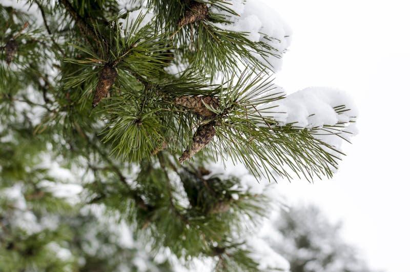 Tree i snow royaltyfria foton