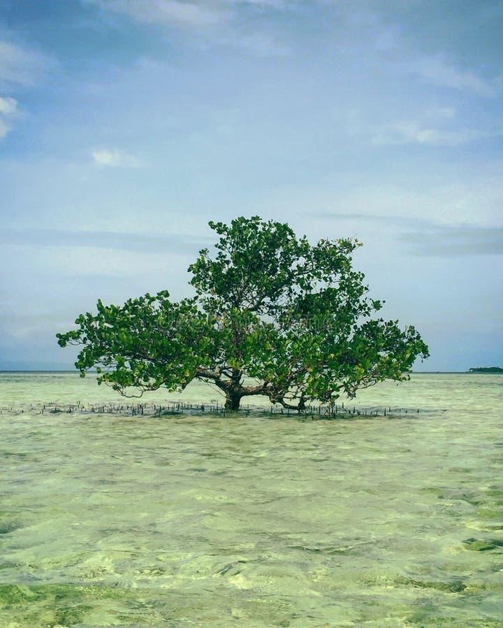 Tree i vattnet royaltyfri fotografi