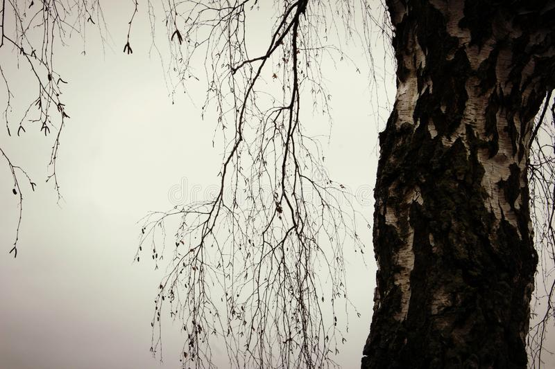 Tree i vinter royaltyfri bild