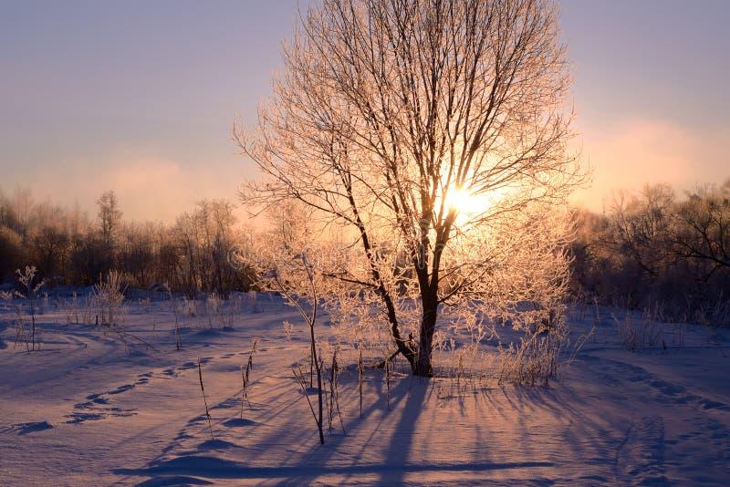 Tree illuminated by the rising sun stock image