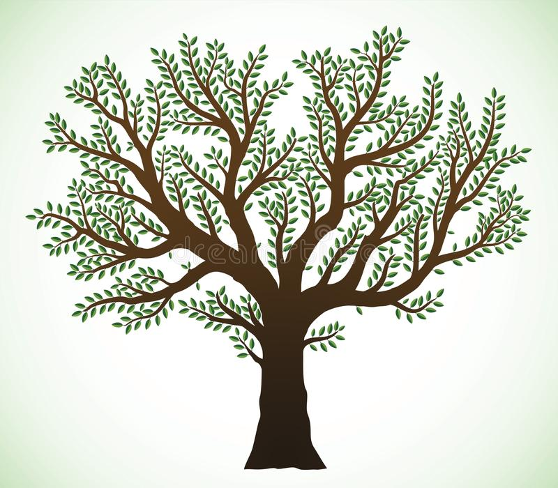 Tree illustration. Detailed illustration of a tree with green leaves royalty free illustration