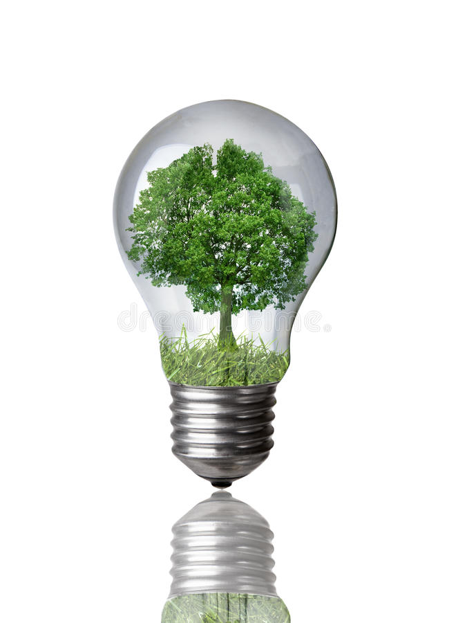 Free Tree In A Light Bulb Stock Photos - 10026253