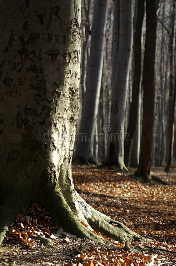 Free Tree In Autumn Royalty Free Stock Photography - 2603937