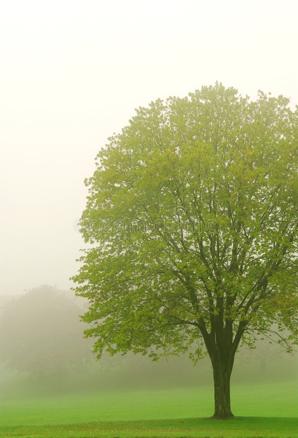 Free Tree In Fog Royalty Free Stock Image - 2469506
