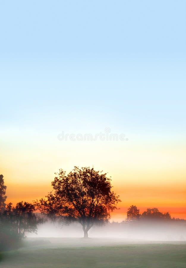 Free Tree In Fog Royalty Free Stock Photo - 25178675