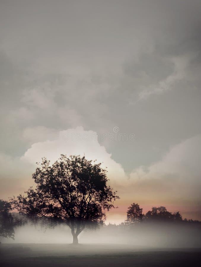 Free Tree In Fog Stock Photo - 25192530