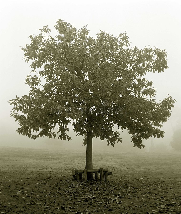 Free Tree In The Fog. Stock Photo - 303750