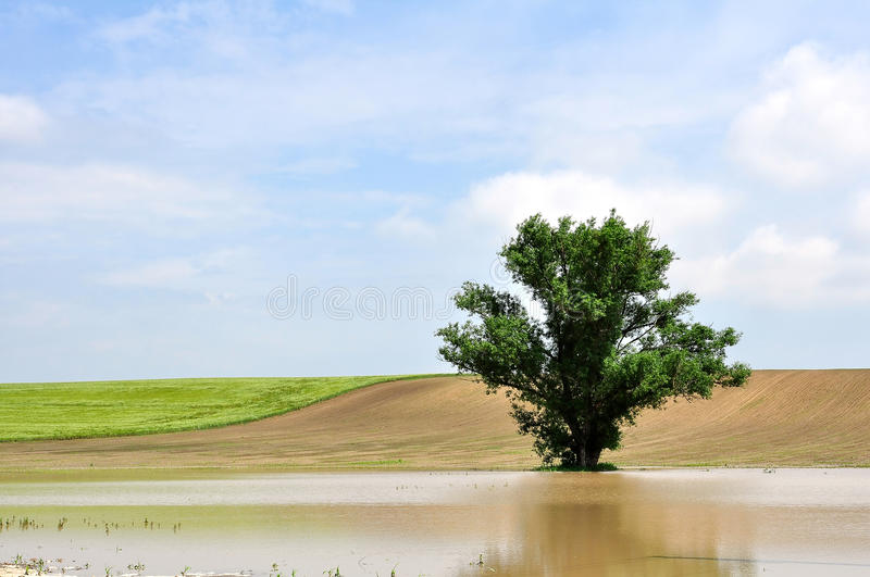 Download A tree in the inland water stock image. Image of thunderstorm - 17088313