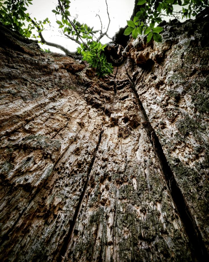 A tree from the inside royalty free stock photo