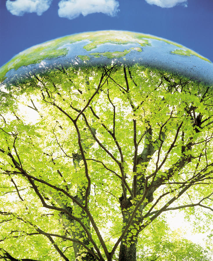Tree Inside the Earth stock photos