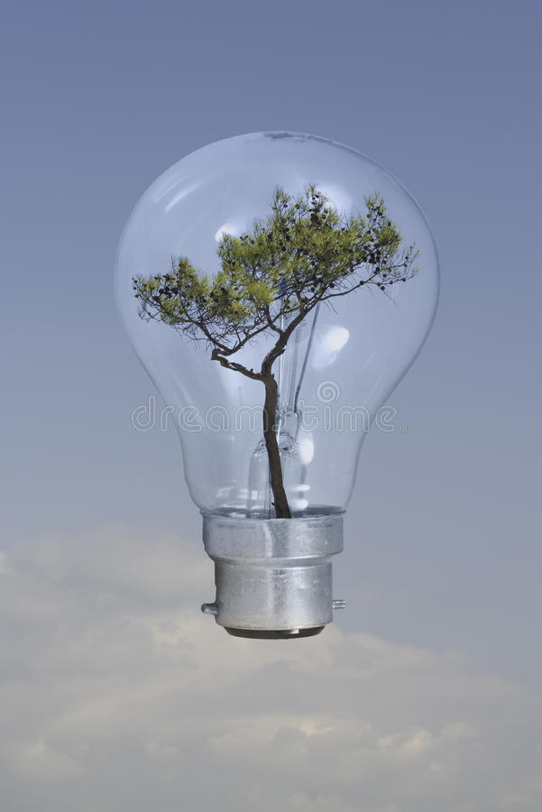 Free Tree Inside Lightbulb Royalty Free Stock Photos - 34901378