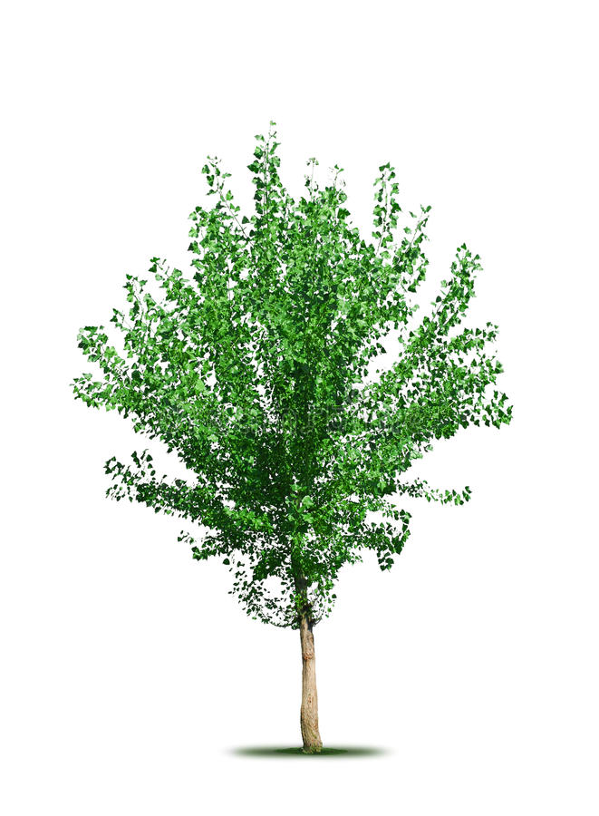 Download Tree isolated stock illustration. Image of green, leaf - 16351784