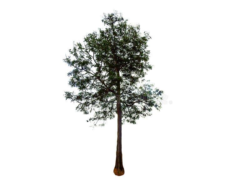 Tree isolated background. stock photos
