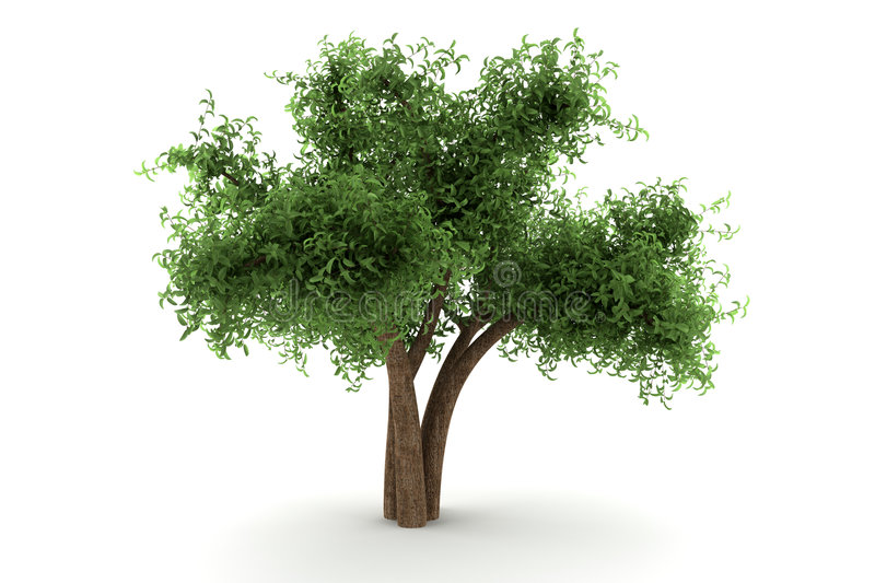 Tree isolated on white background stock illustration