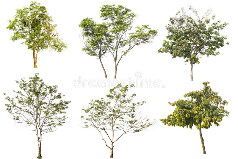 Tree on isolated royalty free stock photography