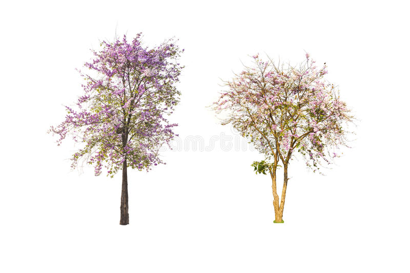 Tree on isolated royalty free stock image