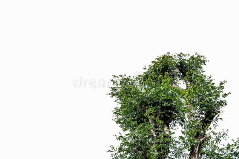 Tree isolated on white with clipping path. royalty free stock photography