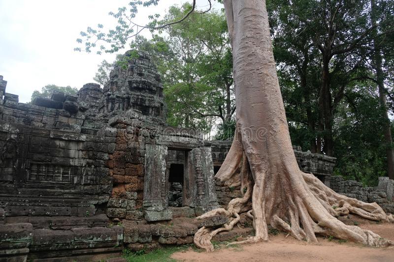 Ta Prohm temple like in Tom Raider in Angkor, Cambodia royalty free stock photo