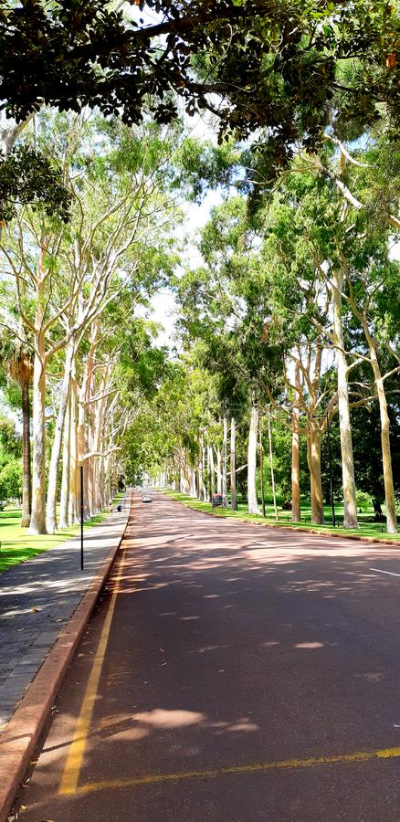 Tree in kings park - way royalty free stock images