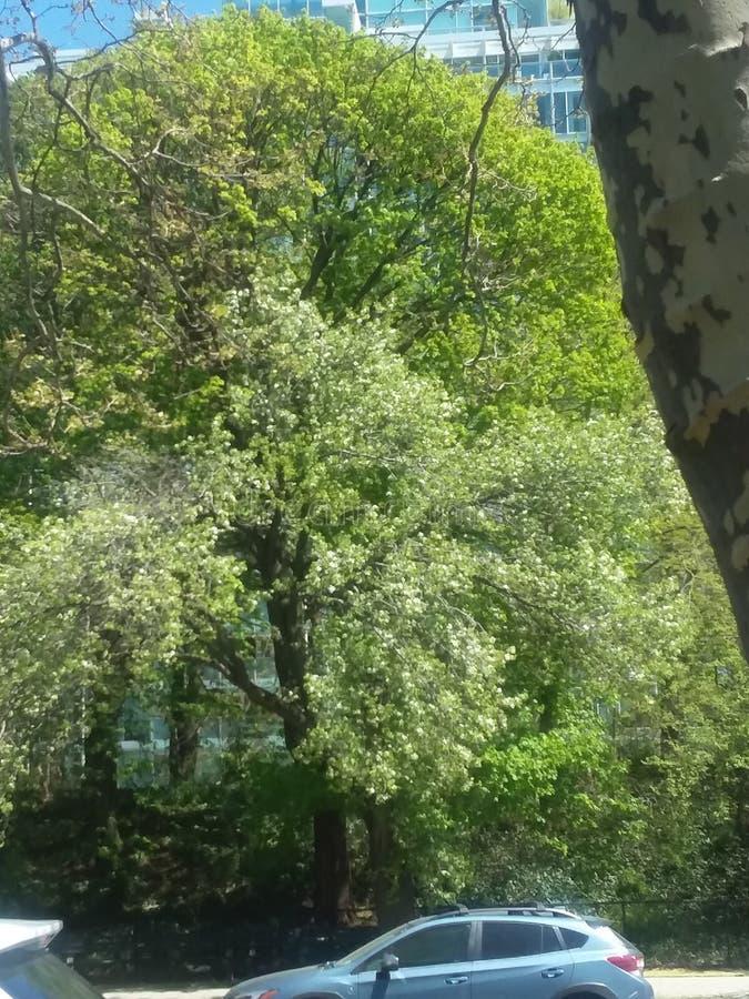 Tree& x27; la s di vita ama una verità impressionante immagine stock