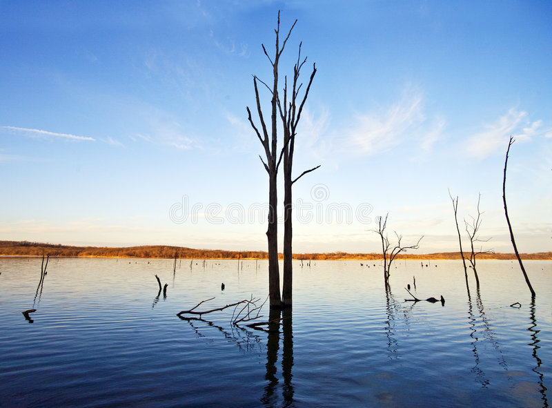 Download Tree and Lake stock photo. Image of fades, descending - 5912434
