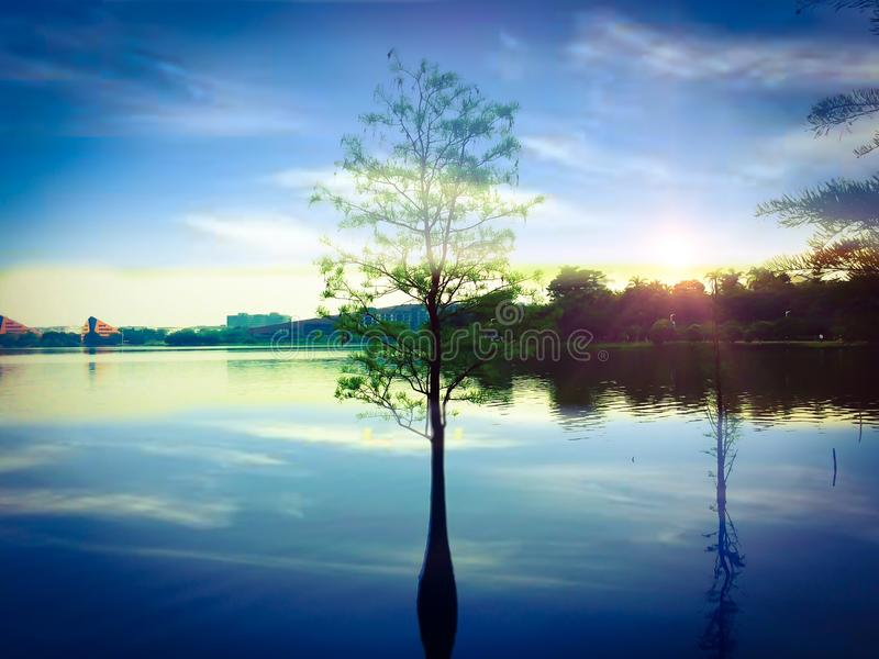 The tree in the lake stock photo