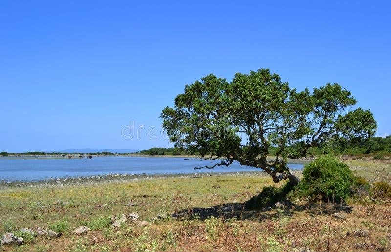 Tree and lake royalty free stock photo