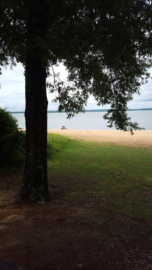tree at lake stock photo