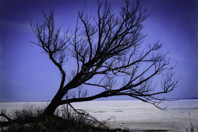 Tree on Lake Nipissing stock photo