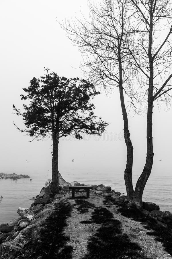 Tree on a lake shore in the middle of mist stock photo