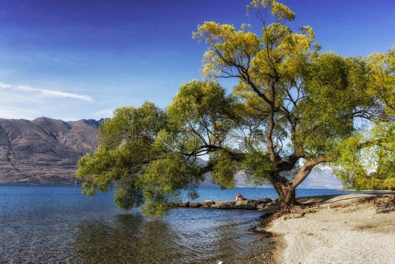 Tree by lake wakatipu stock image