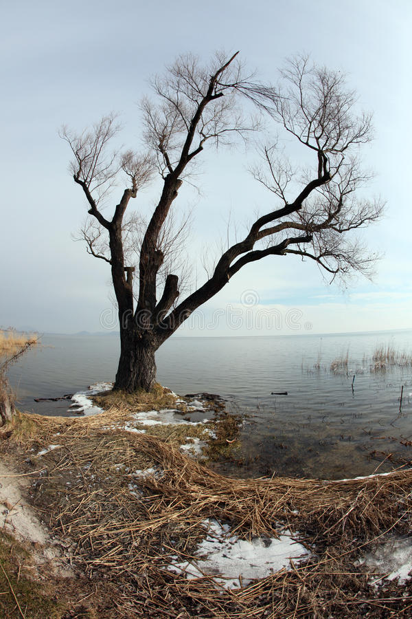 Download Tree in the lakeside stock photo. Image of lake, water - 18066164
