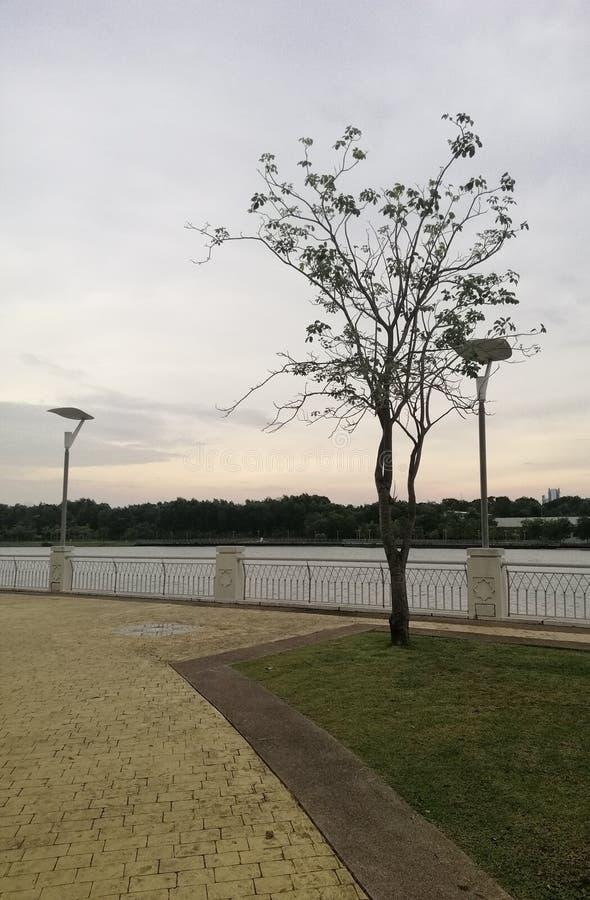 A tree at the lakeside Putrajaya, Malaysia stock photo