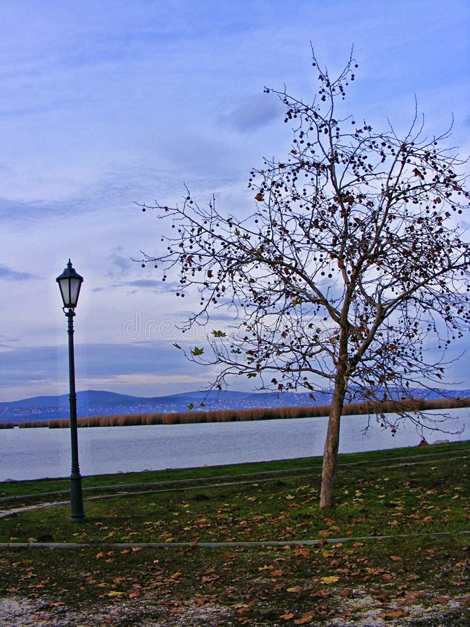 Tree with a lamp next to a lake in the autumn evening stock photo